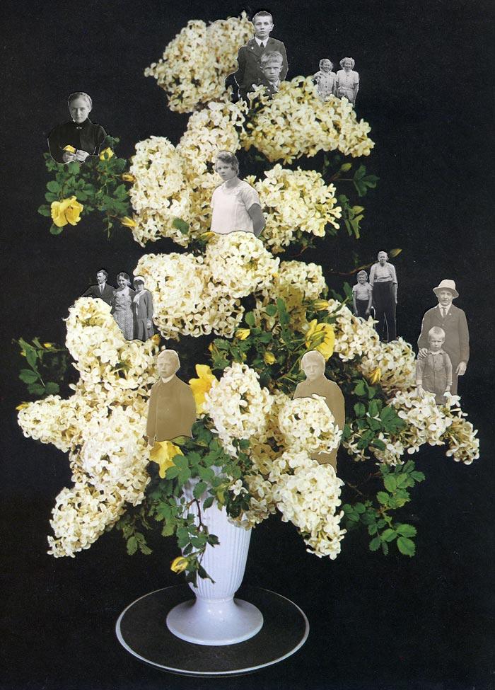 Marja Viitahuhta, Lamiales, sarjasta Flowers to flowers, 2018, kollaasi, 42 x 30 cm