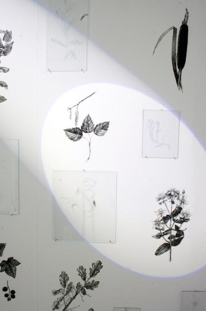 Kaisa Eriksson: Yksityiskohta installaatiosta Varjoherbaario, 2018, pigmenttivedos, Polykarbonaattilevy, liikkuva valo
