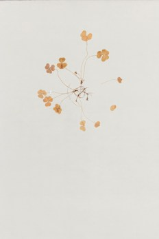 Terhi Heino: Onnenpyörä