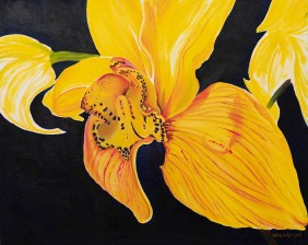 Cymbidium on Blue Oil on canvas $1000.00
