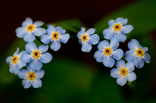 """James Correia Water Forget Me Not Photograph on canvas 20"""" x 30"""" $235.00"""