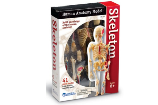Learning Resources Skeleton Model - a model that your child can easily assemble with easy instructions to follow. A fun way to know more about the human body.