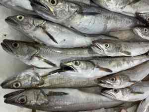 comprar pescada online