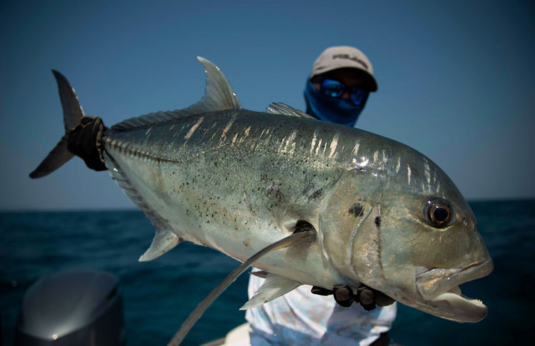 No2_Giant-trevally_fishing_popping_andaman_Daiwa-Saltiga_gamefishingasia_boat_big-fish_gtpopping_boat-charter_angler_Sam-Mitchison