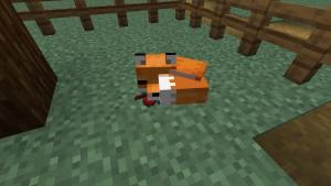 Tame-a-Fox-in-Minecraft