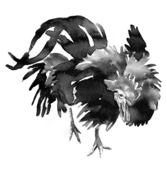 4th Spirit - Rooster - Beam
