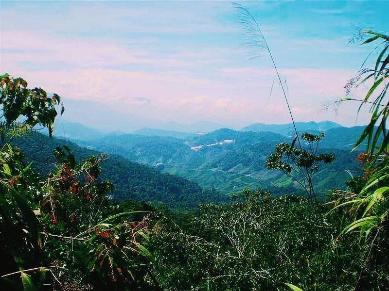 Instagrammable places in Malaysia, Cameron highlands