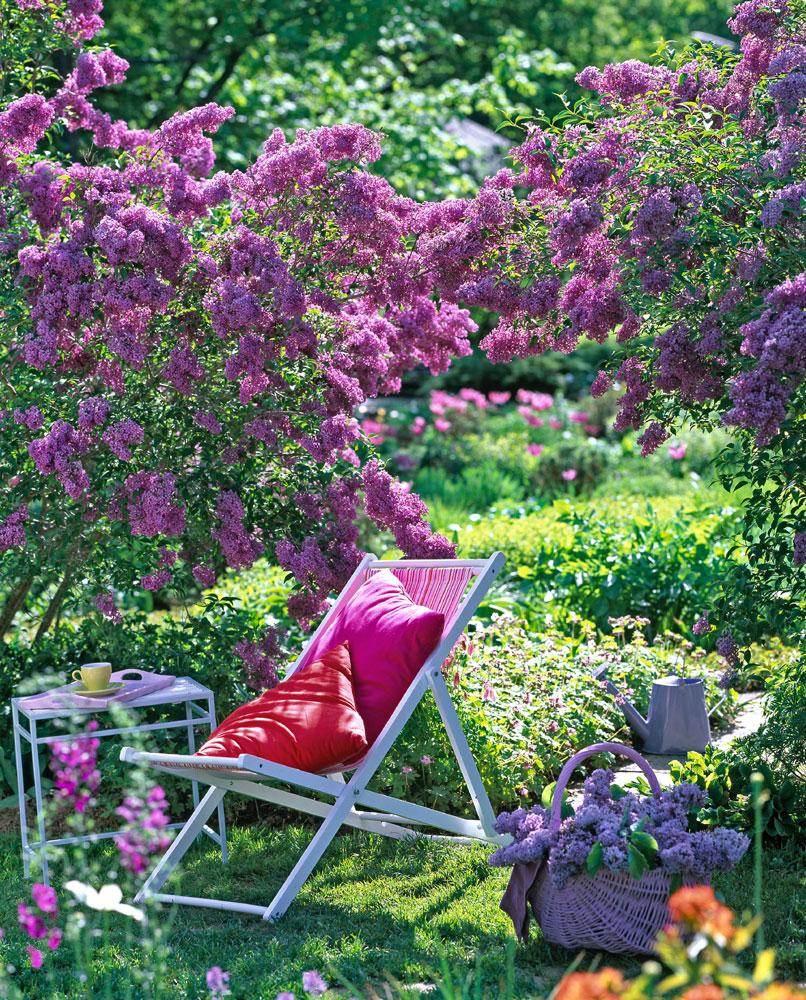lilas plante d exterieur gamm vert