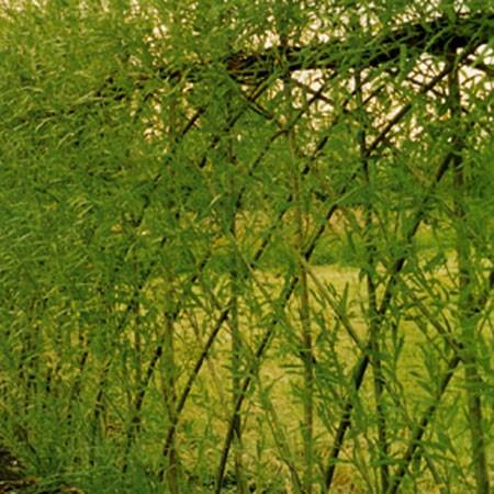 une bordure vivante gamm vert