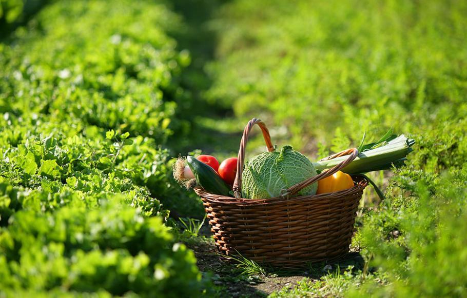 comment cultiver des melons gamm vert