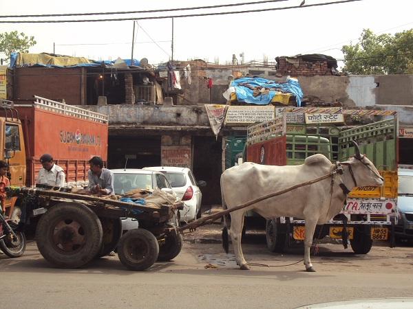 Bienvenue dans la vie de Delhi!