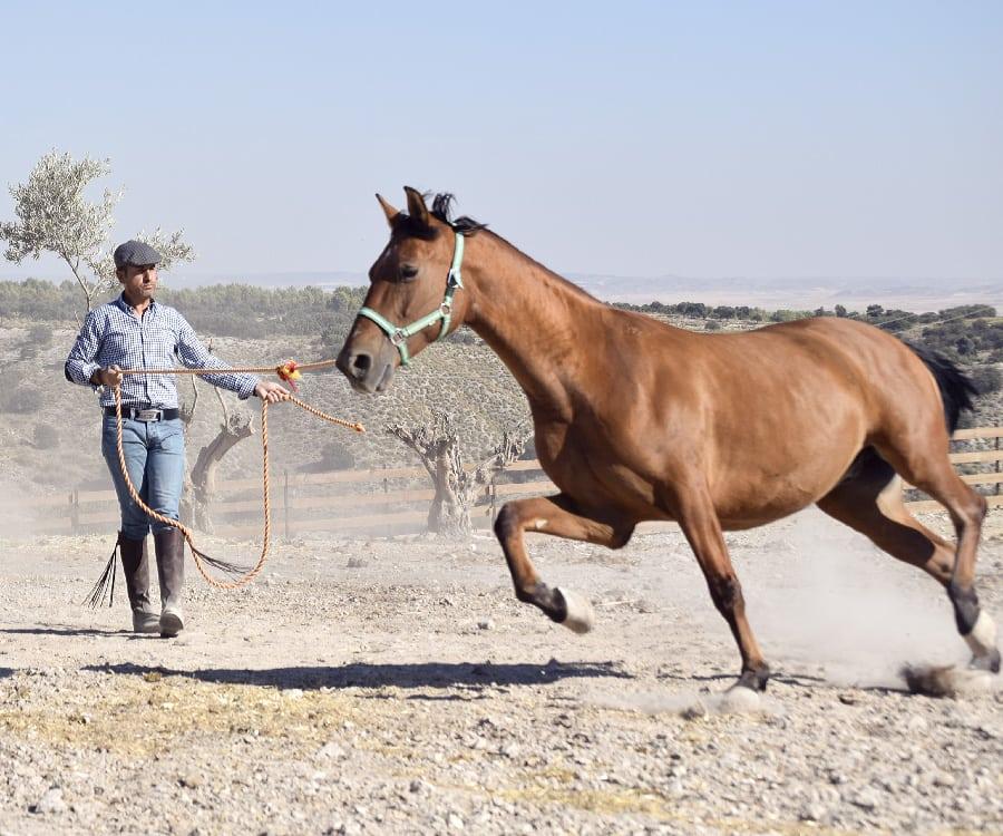 Pepe, uno de los caballos de trabajo de la finca de Ganadería San Isidro