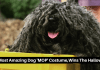 The Most Amazing Dog 'MOP' Costume,Wins The Halloween!