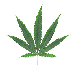 Cannabis Business Service Directory
