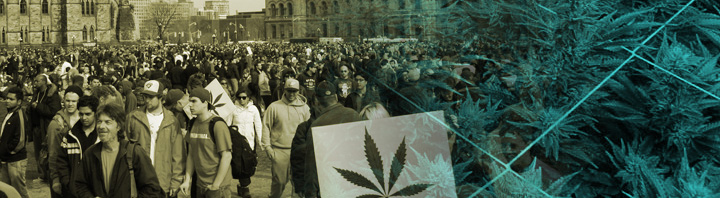 International Cannabis News