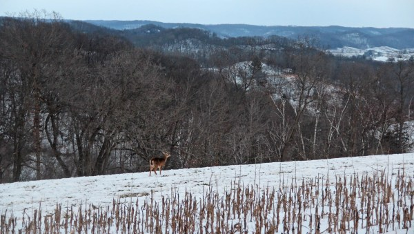 Smith: A holiday treat for deer hunters, land managers
