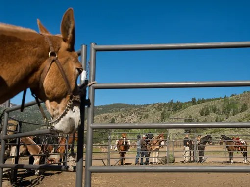 XXX_Horseback-jmg_94446