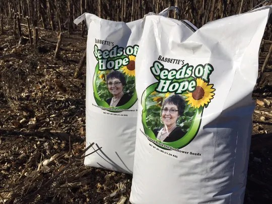 Bags of sunflower seeds ready for sale to raise money