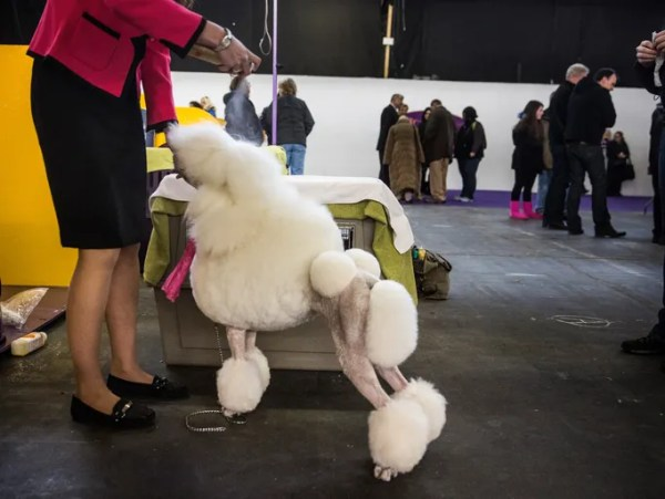 138th annual Westminster Dog Show