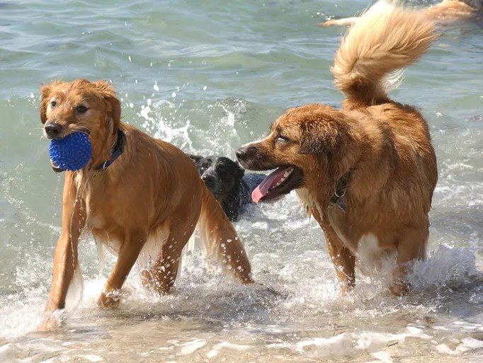 Canines get oceanfront action at Fort DeSoto Paw Playground