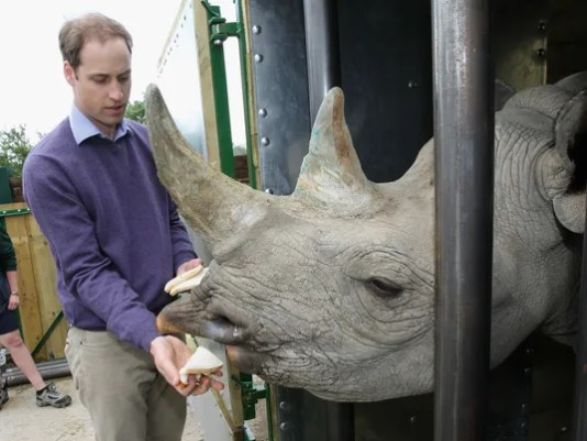 Prince William and rhino