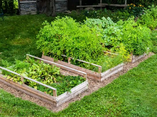 Vegetable gardens in raised boxes are a good idea in