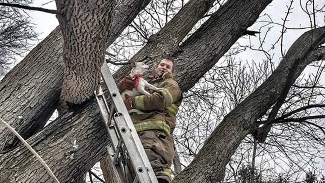 Firefighters Rescue Dog Stuck In Tree