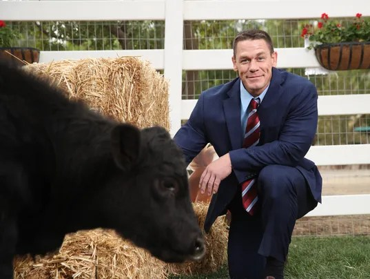 John Cena shows he's not serious as a peace-loving bull in ...