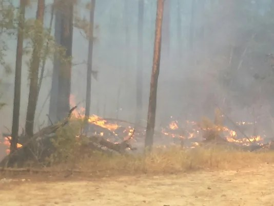 Embers from BBQ pit believed to sparked wildfires in Tyler ...