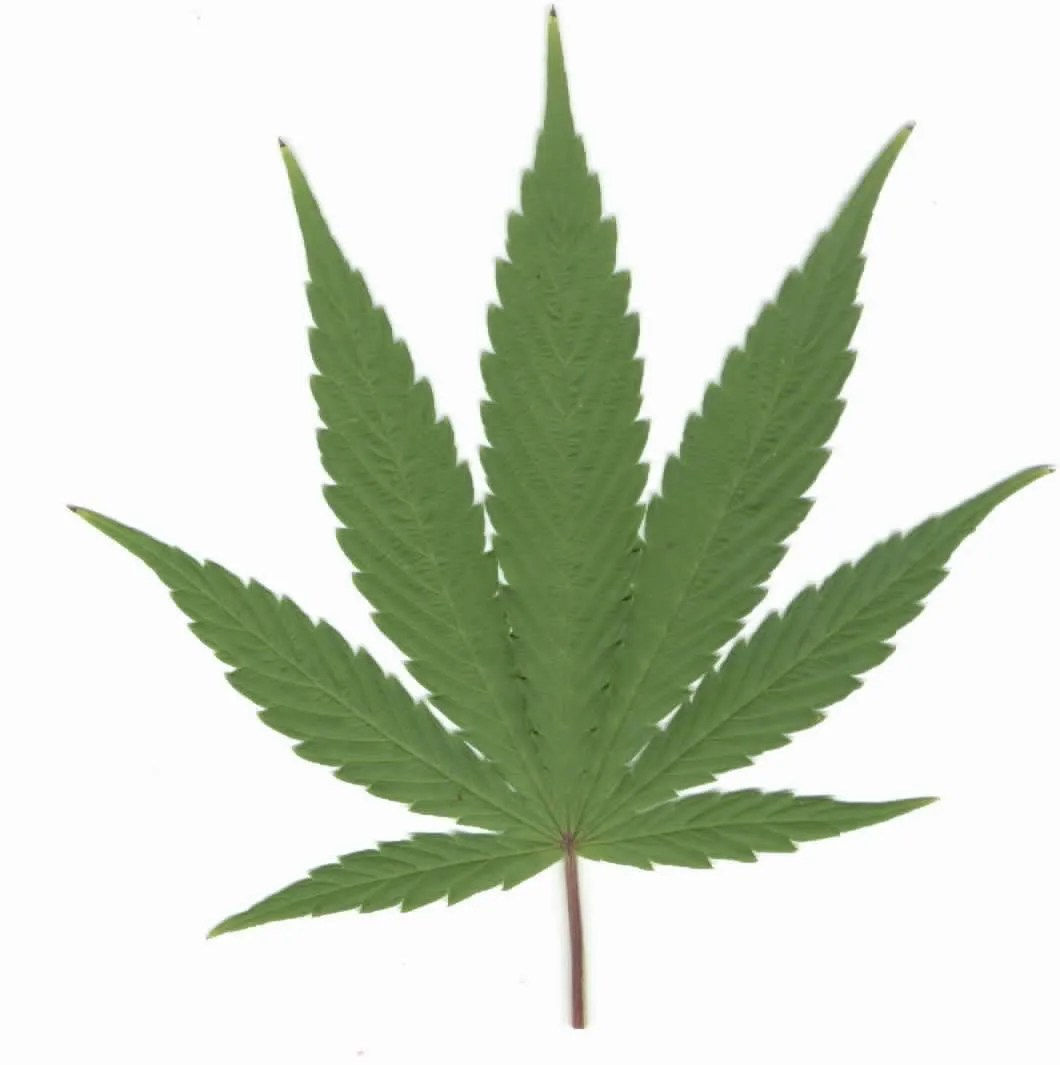 Discovery fit and health writers this article is intended for informational purposes only and is not a s. Recreational Marijuana Struck From Ballot In Petoskey