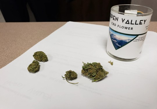 Aspen Valley CBD flower are the two clumps of substance on the right, and the two clumps on the left are marijuana seized by the Greenfield Police Department.