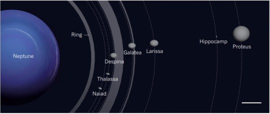 The inner moons of Neptune. Shown here is the location of Hippocamp, compared with those of Neptune's