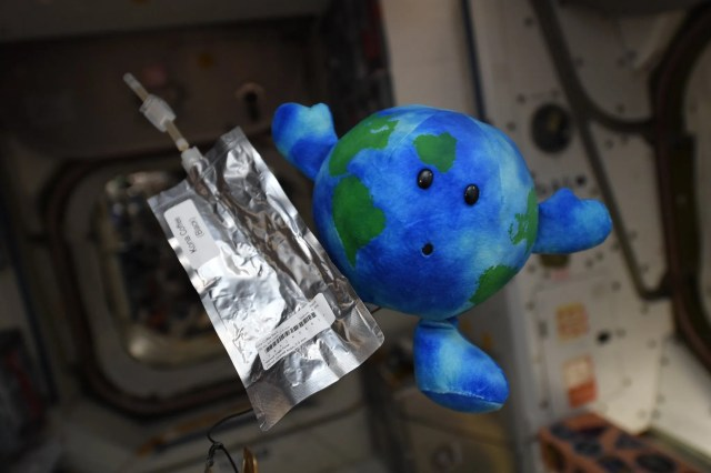 938ea461-13a3-412d-8fcb-91467efb202f-D04q74fWkAEbuQc Best space photos of the week: Little Earth plush toy at ISS