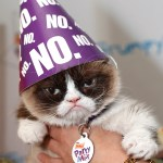 Grumpy Cat Dead At 7 What You May Not Have Know About Meme Star