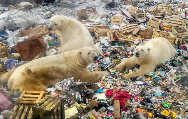 76ef80ba-3373-4a08-a73a-fb088b8b2875-polar_bears We need news to use about climate. Give us a daily carbon dioxide count with the weather.