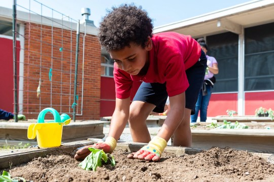 Kullen Williams, a student at  James A. Herod Elementary, works in the school's garden in Abbeville Wednesday, Oct. 2, 2019.