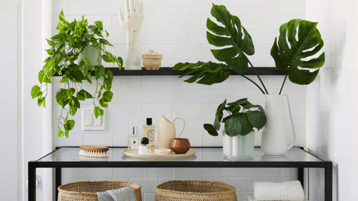 Best gifts for women: Plants from The Sill