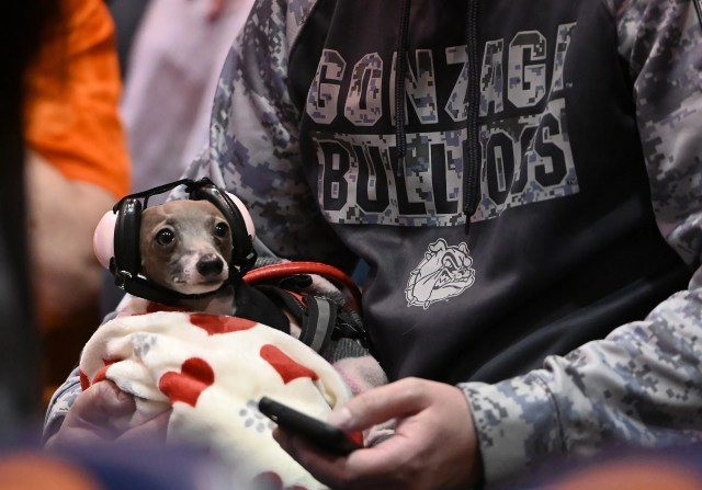 Feb. 15:  A Gonzaga  fan brings his dog with custom ear muffs to watch the game against Pepperdine at Firestone Fieldhouse.