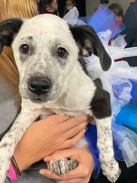 Puppy Bowl 2021: Utica rescue dog Minnie from House of ...