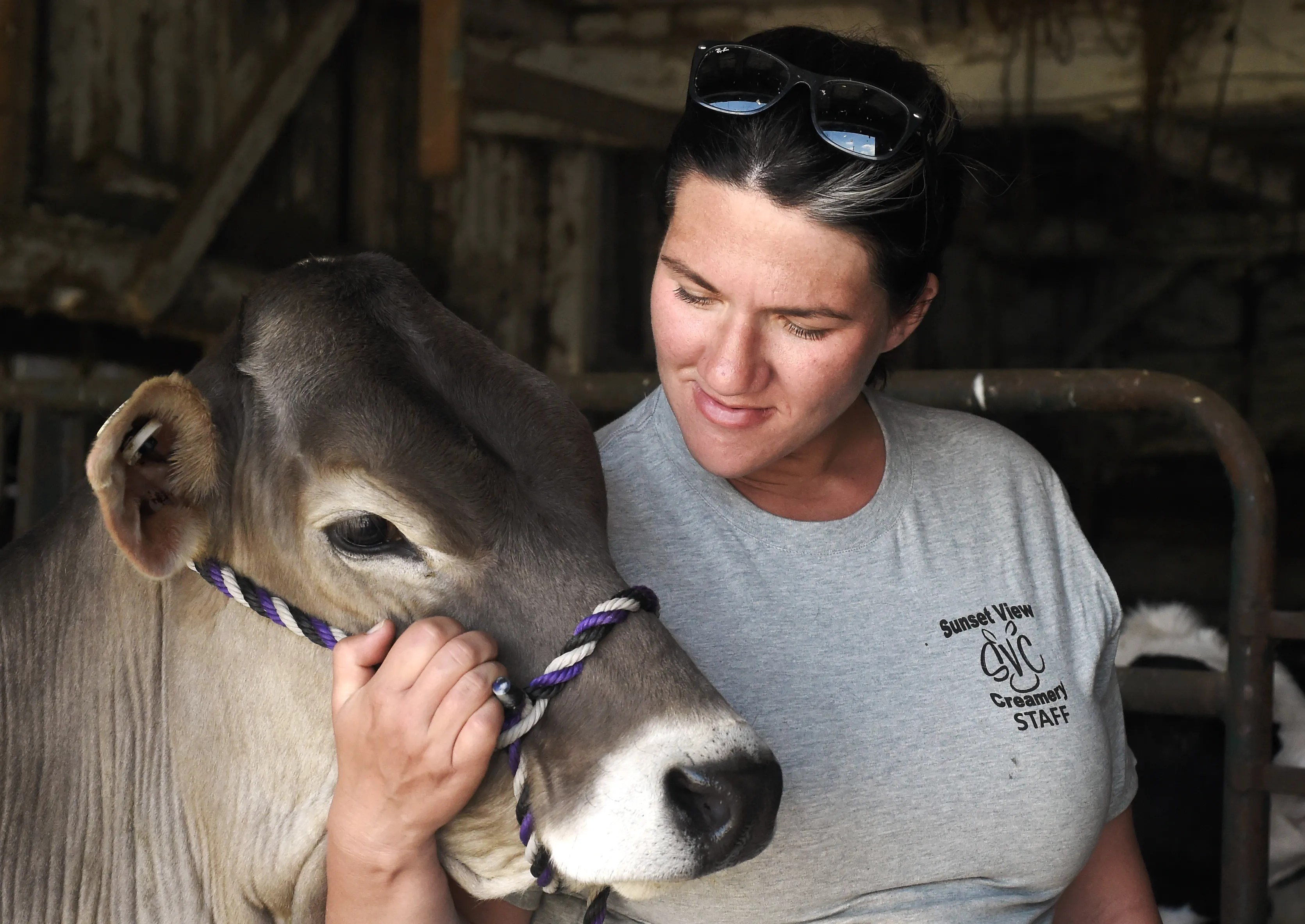 """Jess Hoffman of Sunset View Creamery with one of her Brown Swiss cows. For $15 per half hour, visitors to the Schuyler County farm can now experience """"cow cuddling.""""  May 20, 2021."""