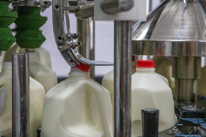 A machine attaches a red plastic lid on a gallon jug of milk at Morning Fresh Dairy on Thursday, July 15, 2021, in Bellvue, Colo.