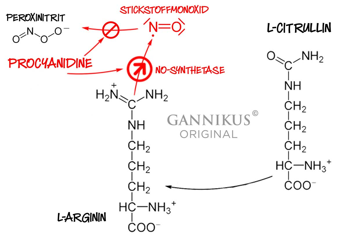 Procynidine NO