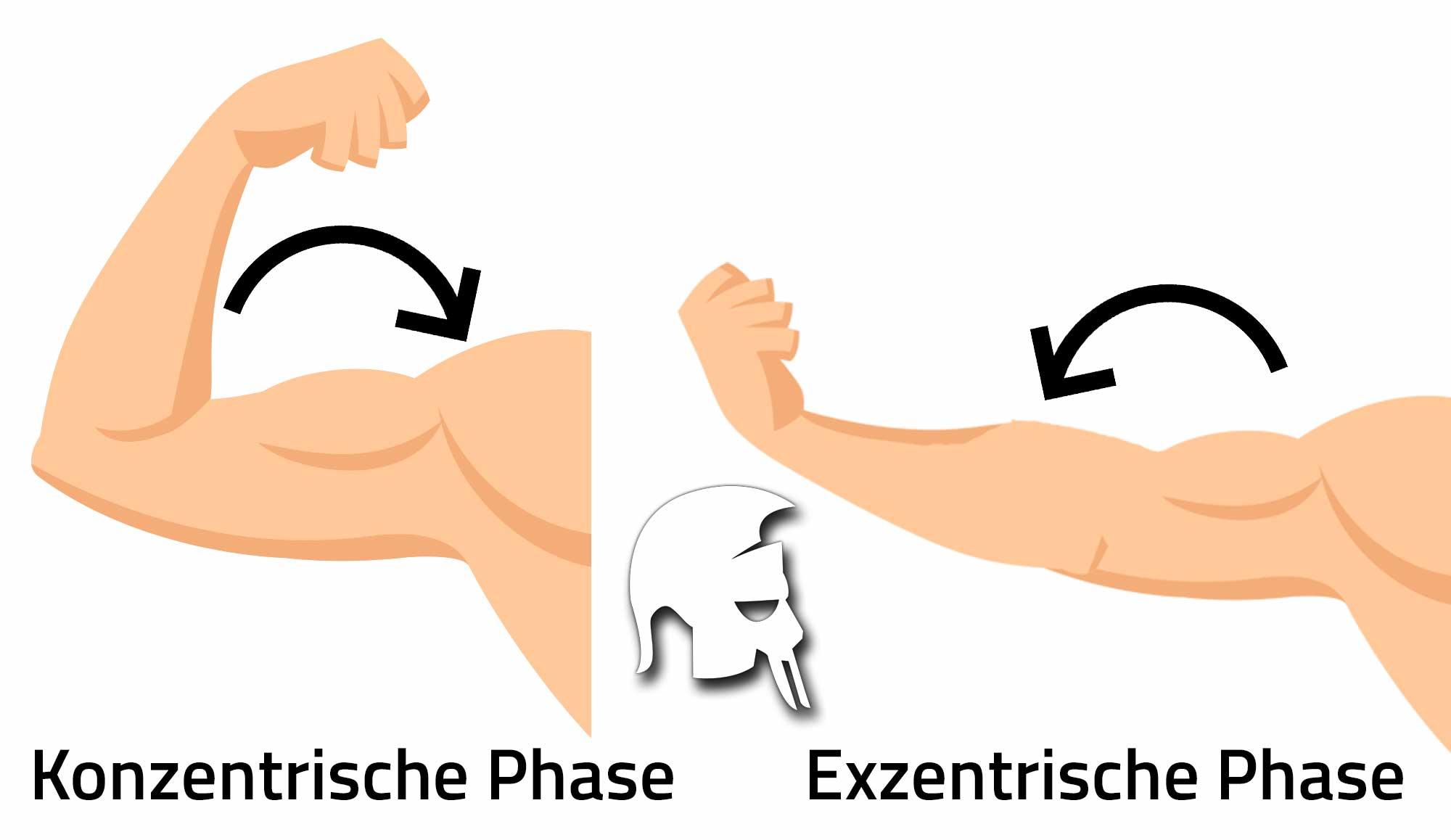 Faktoren Muskelwachstum