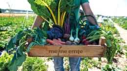 meine ernte - einen Gemüsegarten pachten