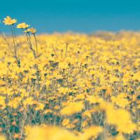 5 Fakten über Heuschnupfen, die du unbedingt wissen musst!