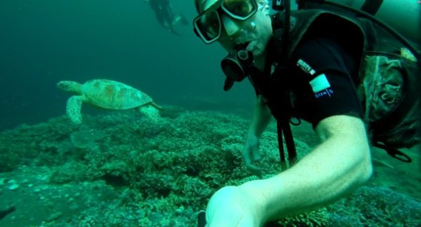 Swimming with Turtles in Sipadan Malaysia