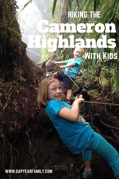 Hiking-The-Camerron-Highlands-with-Kids