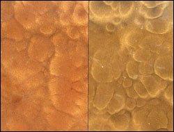 Metallix-Autumn-Blush-Sweet-Brown-Comparison-Sm