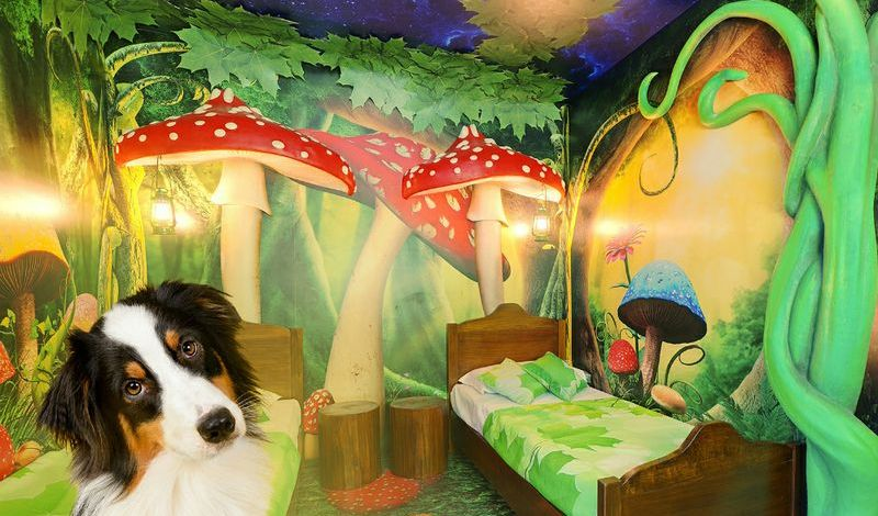 """Gli hotel di Gardaland diventano """"Pet Friendly"""" nel 2021"""