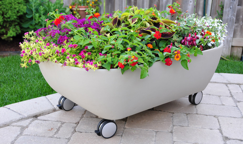 Tomato Container Gardening Ideas